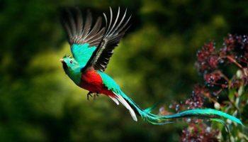 Conheça as 13 Espécies do Aves Mais Raras do Reino das Aves