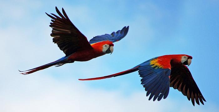 Reino das aves Arara