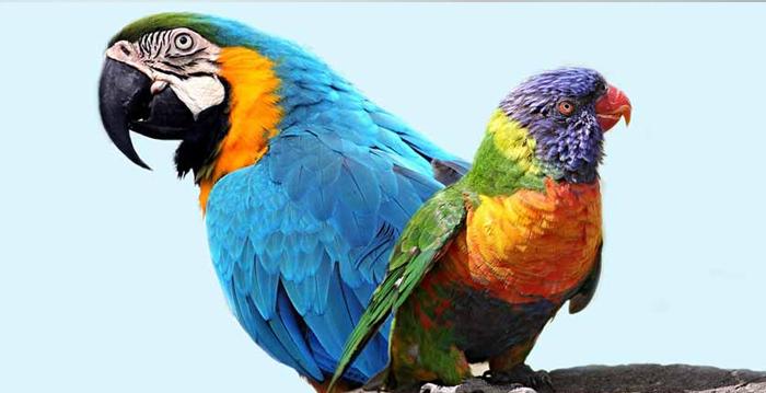 Papagaio, Periquito ou Arara: Qual é a Diferença?
