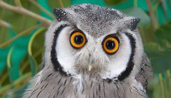 Reino das Aves   Conhecendo as Aves Mais Exóticas do Mundo