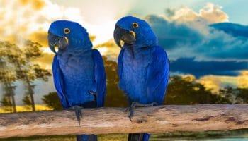 Como é a Reprodução das Aves?